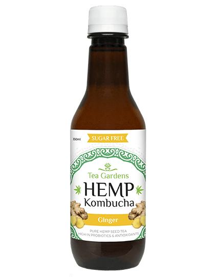 Hemp Kombucha Ginger